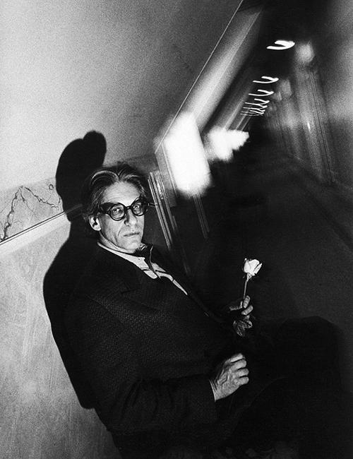 David Cronenberg - Rose